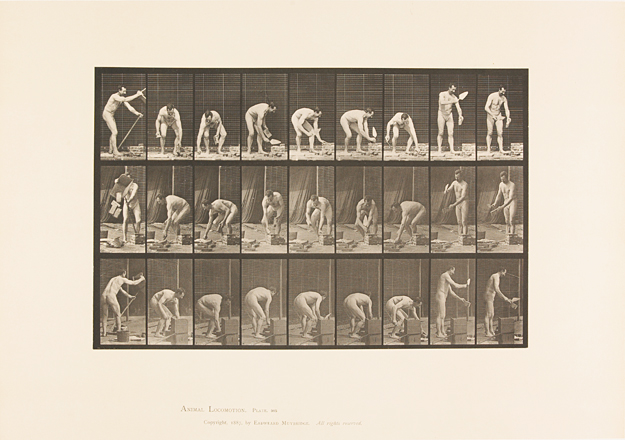 Animal locomotion. Plate 505 - 1887 - E. J. MUYBRIDGE -Inv. 2008.44.23